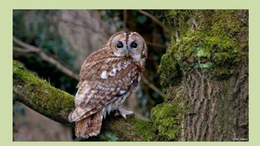 Wildlife Activity Afternoon 5th Sept 2-4pm