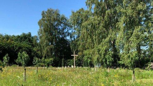 Biodiversität: Exkursionen über die Friedhöfe in Heide und Meldorf