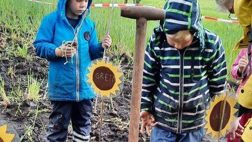 Sonnenblumenaktion im Berglandkindergarten