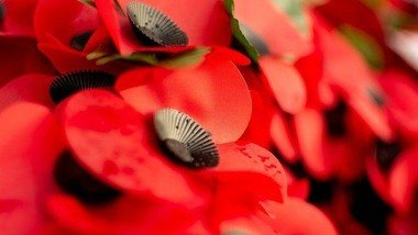 2021 Poppy Appeal Collections at Waitrose