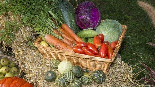 Indbringende høstauktion