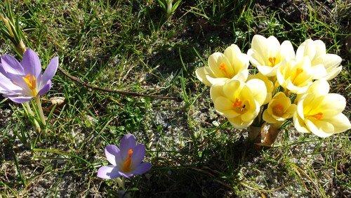 Forår på Nakskov Kirkegårde - klik her
