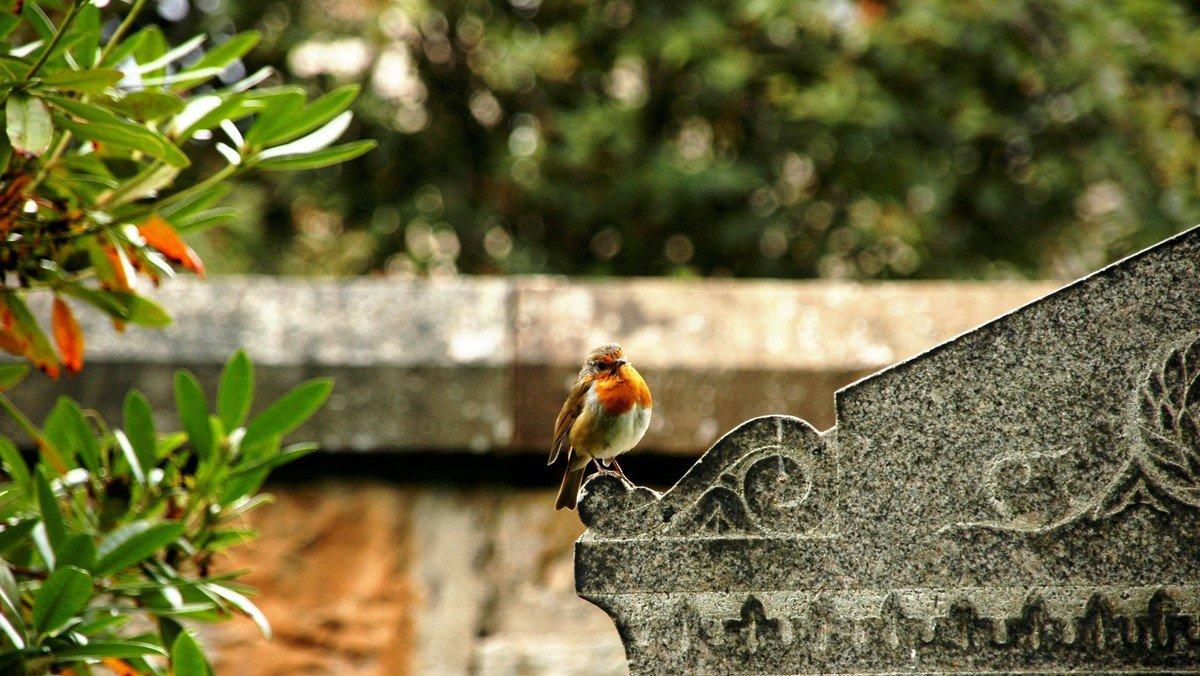 Ausstellung: Die Vögel auf unserem Kirchhof