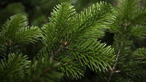 Adventsgudstjeneste - og juletræstænding