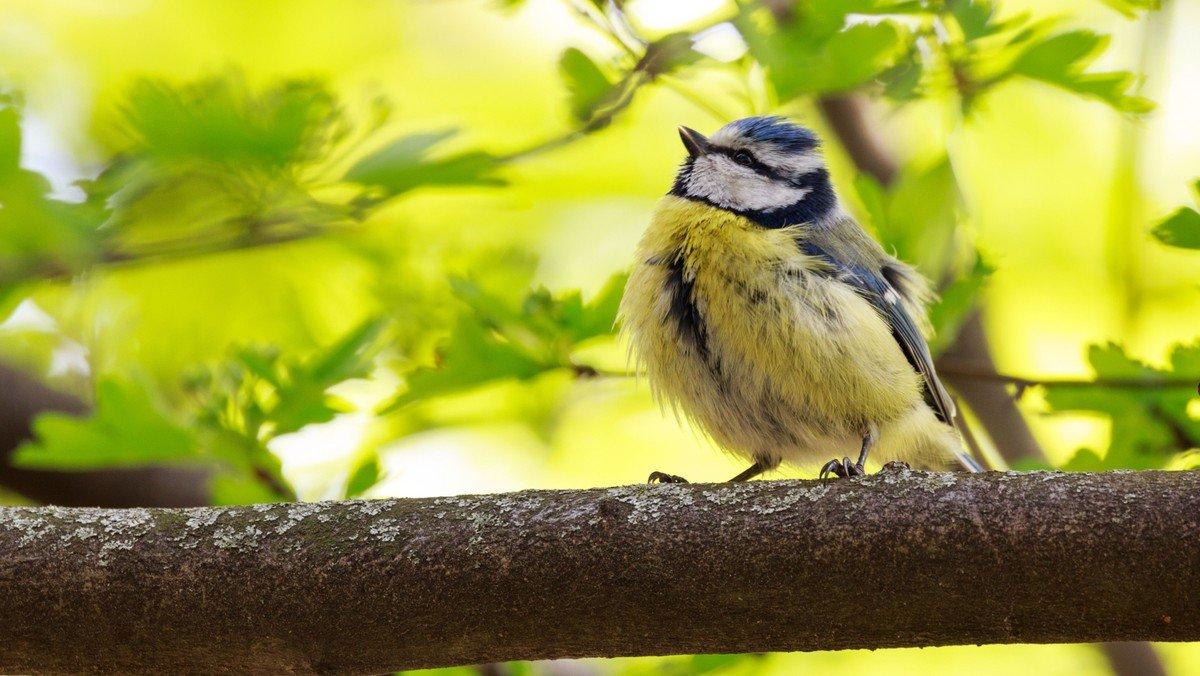 Ord og toner i fugleperspektiv