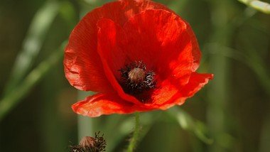 Remembrance Evensong