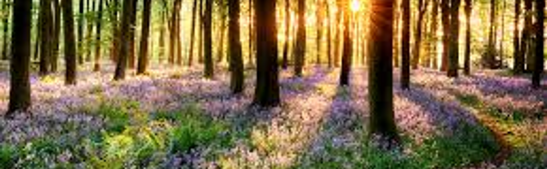 Forårs-demensgudstjeneste