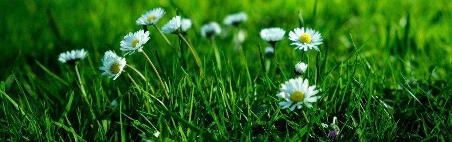 Gartentag - Feg weg, was dich unglücklich macht!