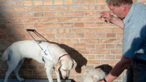 AFLYST - Herreværelset. Tilblivelse af førerhund v/Preben Christenssen