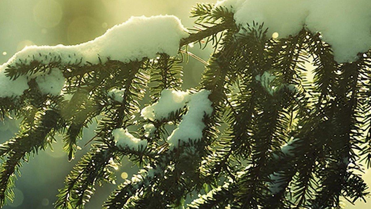 Jul med Det Danske Kammerkor