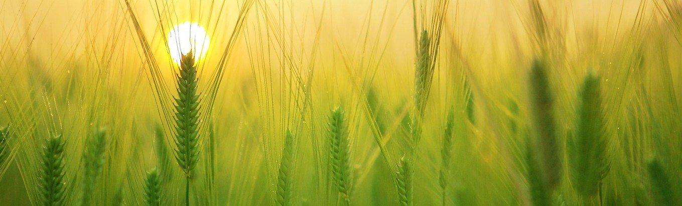 Højmesse - fælles høstgudstjeneste (kopi)