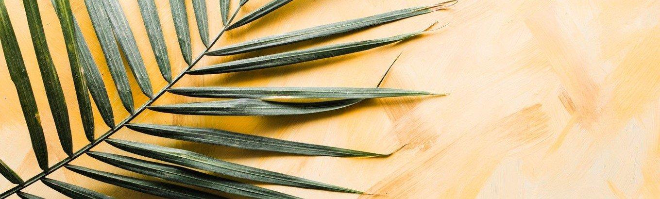 Video-Gottesdienst zum 6. Sonntag der Passionszeit - Palmsonntag