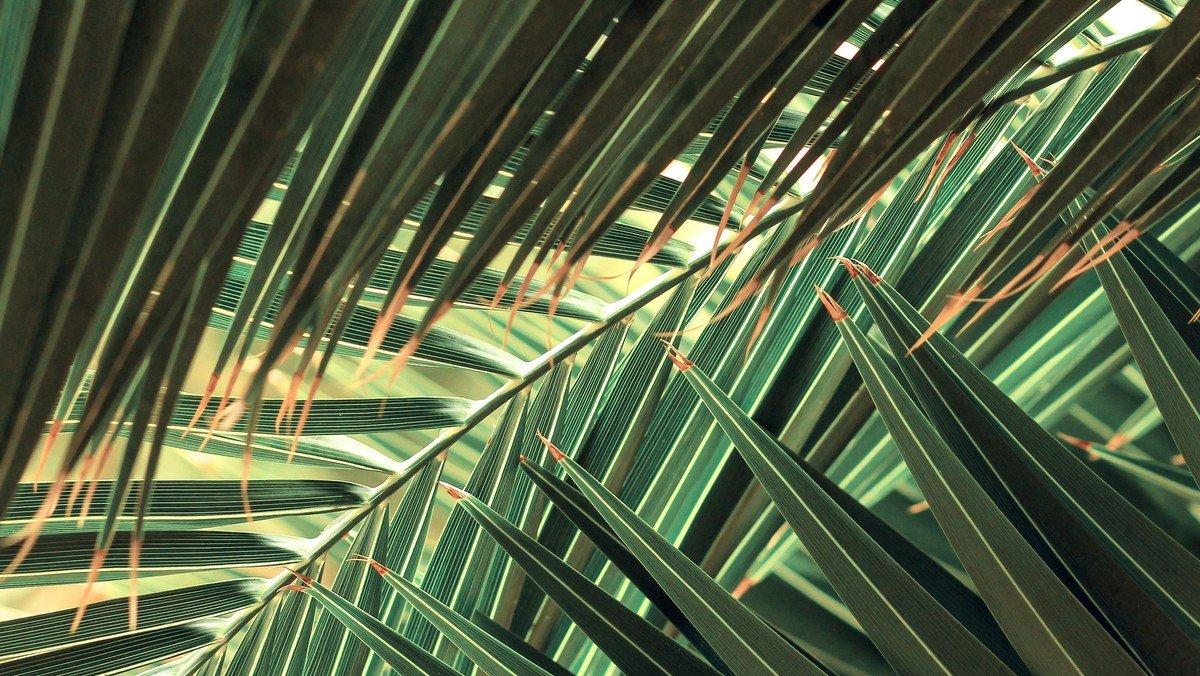 AFLYST! Palmesøndag