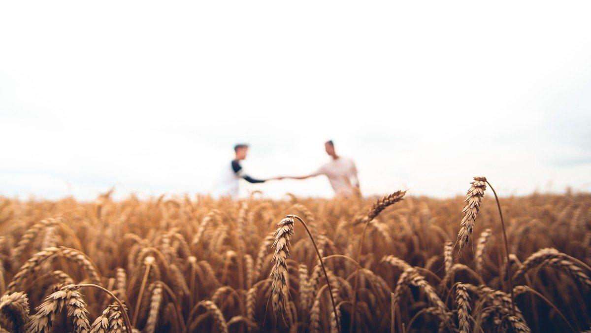 Søndagens høstgudstjenester på Ærø