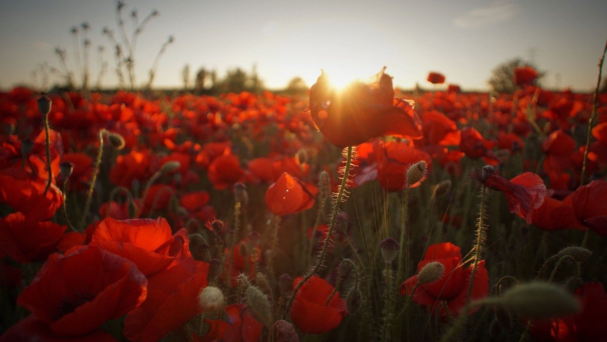 Requiem Service at St. Mary's for Remembrance Sunday