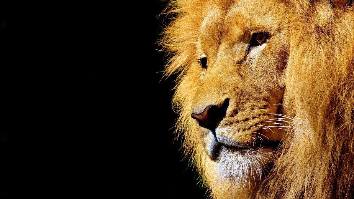 Gud & Gaffel / at være modig - om Daniel i løvekulen