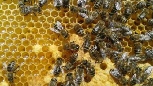 Bienen AG in Konradshöhe