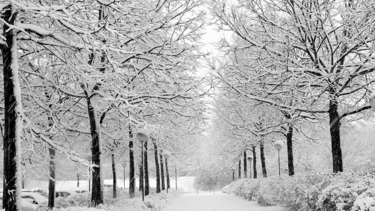 Toben im Winterwald