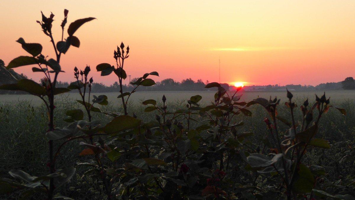 Morgensang, AFLYST