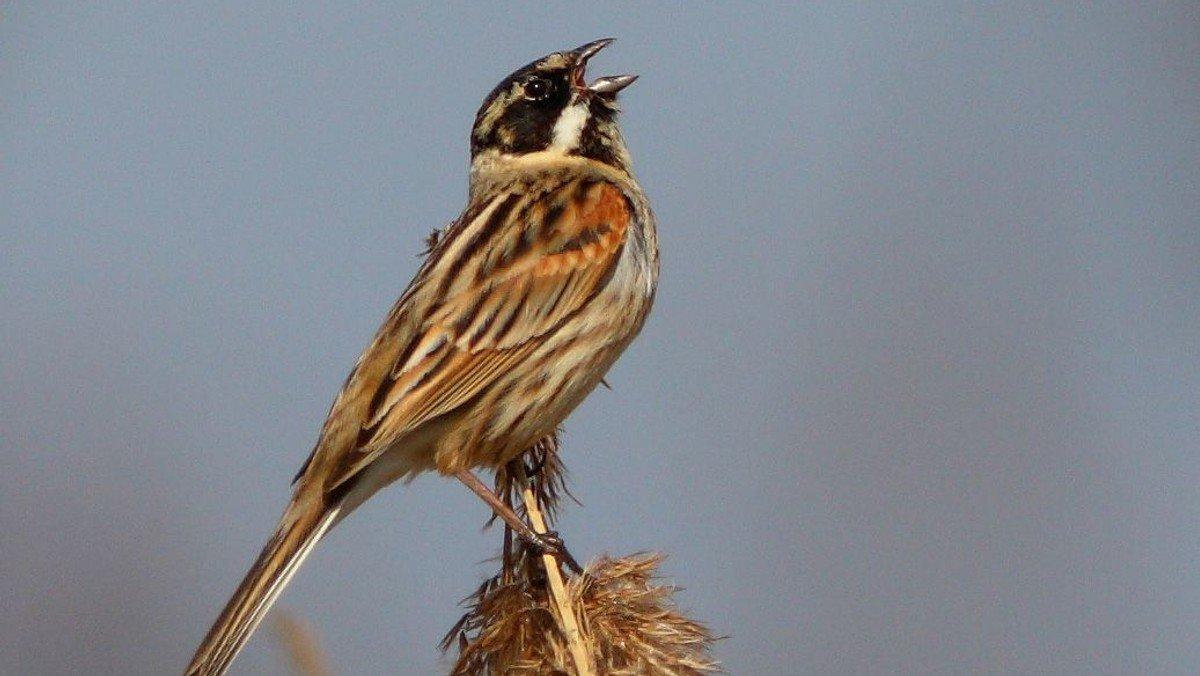 AFLYST - Fugletur