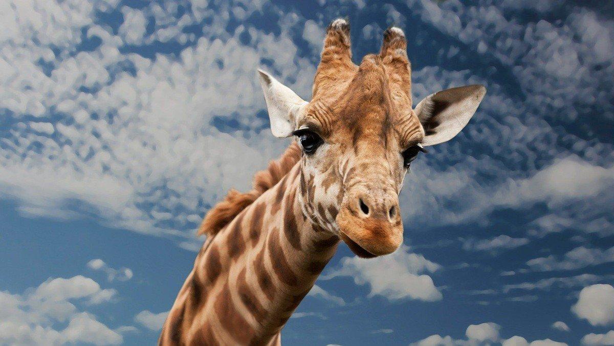 Fortbildung; Wenn die Giraffe mit den Wolf spricht