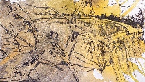 Andagt og Fredagsmøde / med tilmelding / Om Vadehav, fugle og kunst