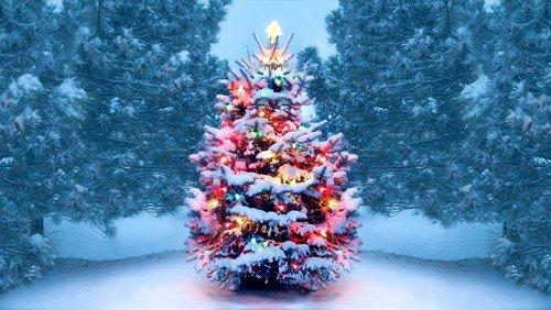 Julegudstjeneste i Præstegårdshaven