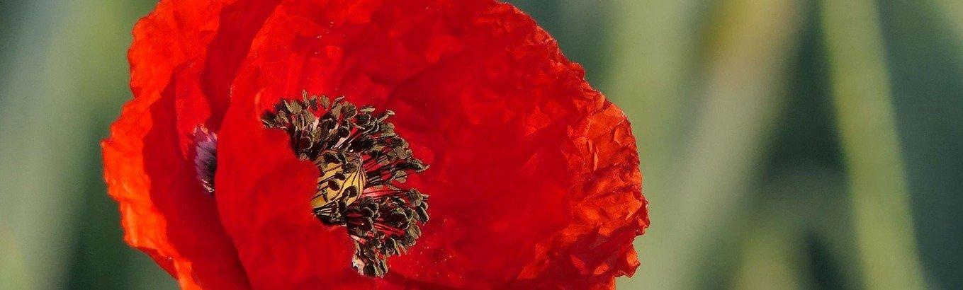 Gartengottesdienst für Trauernde und ihre Angehörigen