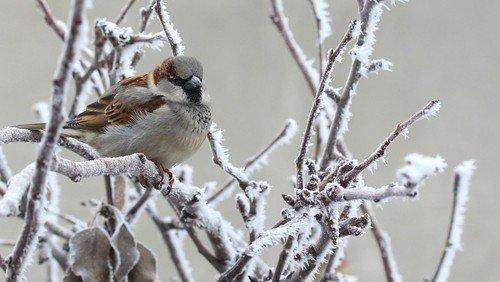 Onsdagskredsen: Sangbogens sangfugle