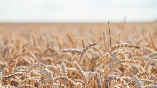 Høstgudstjeneste og høstfest