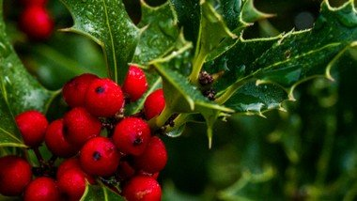Julegudstjeneste for ældre v. Egholm og Sander (obs: tilmelding nødvendig)