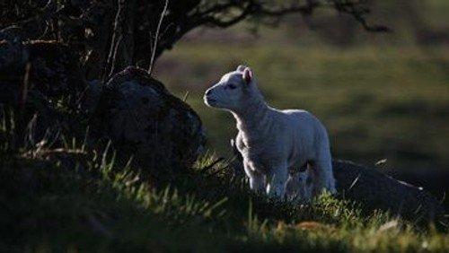 """""""Wer hat wen verloren, der Hirte das Schaf oder das Schaf den Hirten...?"""" Gottesdienst mit Pn Paap"""