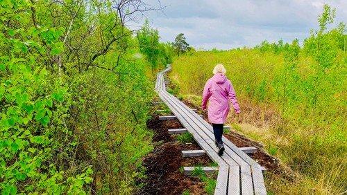 Pilgrimsvandring på Horreby Lyng