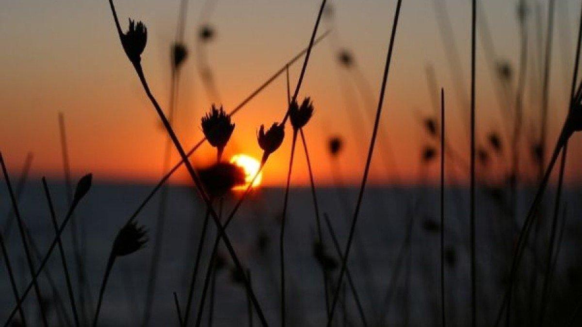Fællessang ved solnedgang