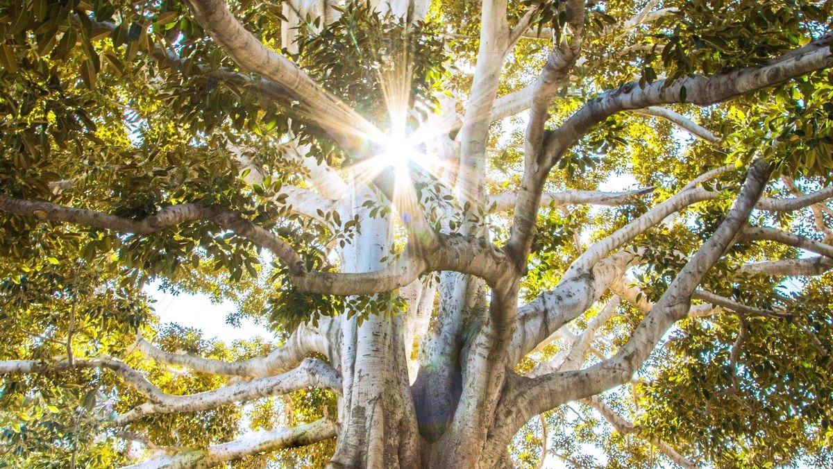 The Christian Family Tree