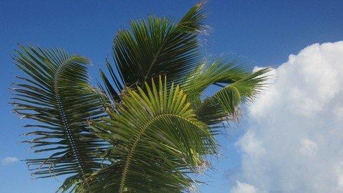 Palmesøndagsgudstjeneste i  Trekroner kirke