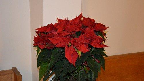 Julegudstjeneste ved Birgitte L. Leisner