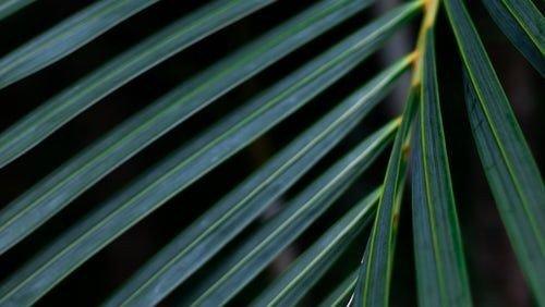 Højmesse v/ABLU - Palmesøndag