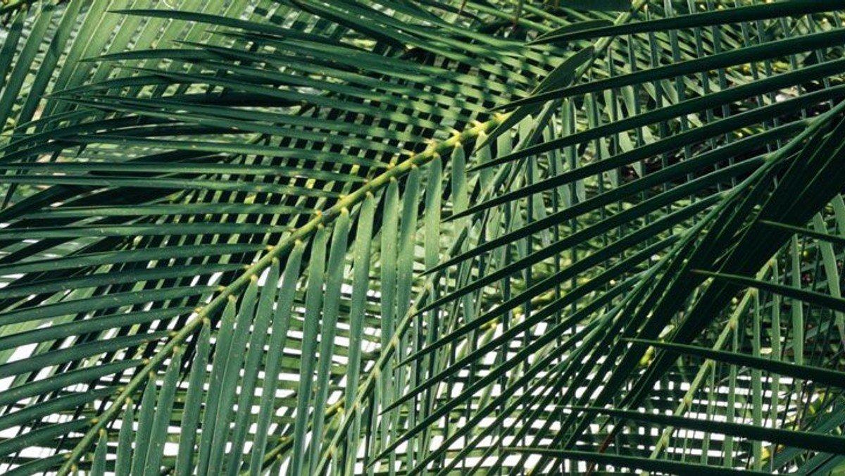 Palmesøndag gudstjeneste