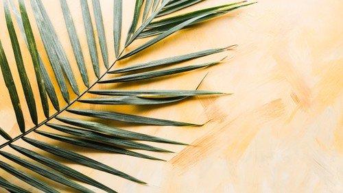 Gudstjeneste - Palmesøndag