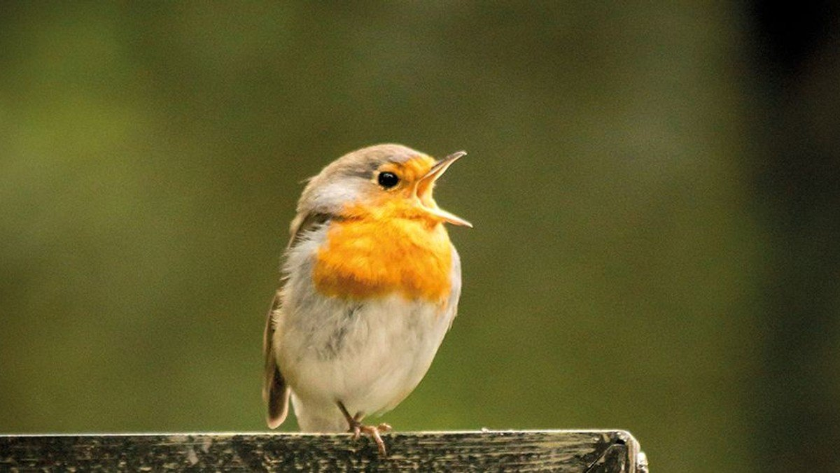 Sing Along-Mitsingangebot zu Mariä Lichtmess