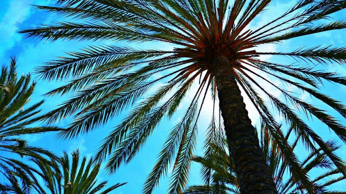 Palmesøndag højmesse