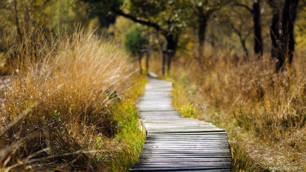 Walk & Talk - Slå følge med en af kirkens præster på en gåtur i det fri