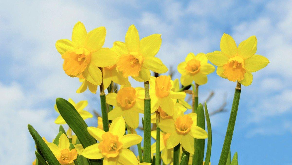 DIGITAL: Ostern wird festlich – mit viel Segen, Freude und Hoffnung
