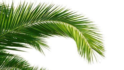 Palmesøndagsgudstjeneste