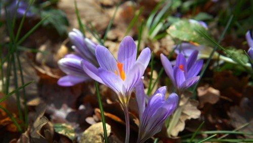 Auf den Spuren des Frühlings - Spaziergang für Familien