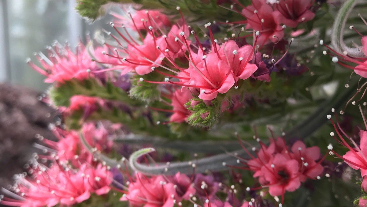 abgesagt: Treffpunkt Gemeinde im Botanischen Garten