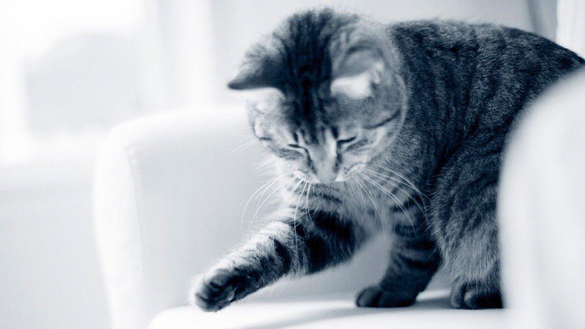 Spaghettigudstjeneste. Den, der gemmer til natten, gemmer til katten!