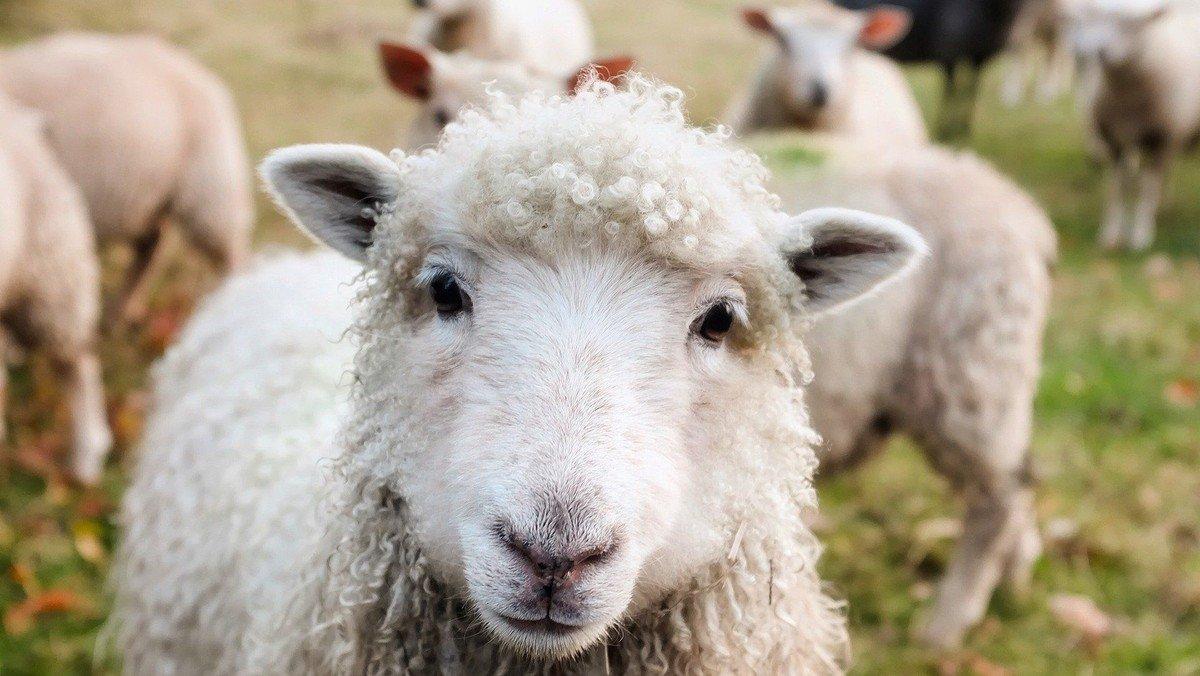 """Familiengottesdienst mit Segnung der Schulkinder - """"Gott gibt niemanden verloren"""" - Das Gleichnis vom verlorenen Schaf"""