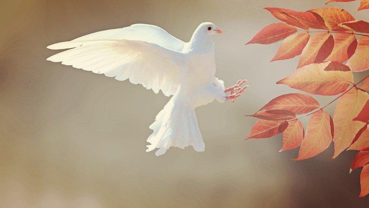 Friedensgebet mit Versöhnungslitanei aus Coventry